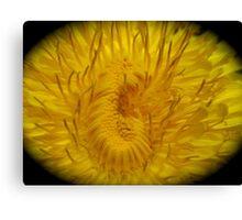 NEW - FLOWER MACRO Canvas Print
