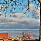 Bench along Lake Michigan in the winter by Graphxpro