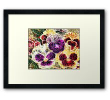 Pansies Flowers Abstract Framed Print