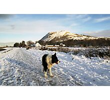 Indy in the snow Photographic Print