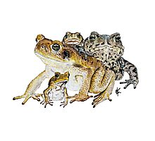 The Toads Photographic Print