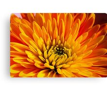 Other Beautiful Things Canvas Print
