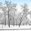 First Snow by kkphoto1