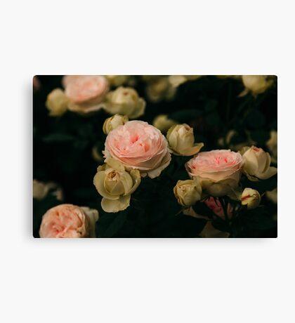 Korean Roses Canvas Print