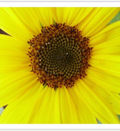 Yellow Sunflower Sticker
