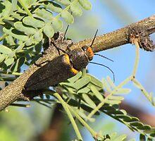 Metalic Wood-boring Beetle by Ingasi