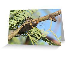 Metalic Wood-boring Beetle Greeting Card
