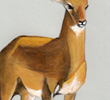 Ilustration art - Money antelope Sticker