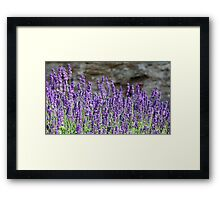 lavender flowers on mountainside Framed Print