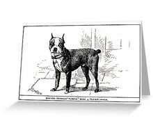 All about dogs a book for doggy people Charles Henry Lane 1900 0225 Boston Terrier_jpg Greeting Card