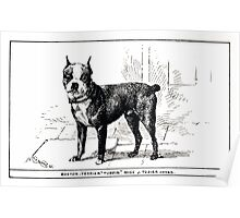 All about dogs a book for doggy people Charles Henry Lane 1900 0225 Boston Terrier_jpg Poster