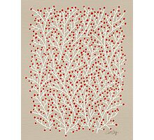 Red & White Berry Branches Photographic Print