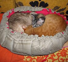 Pepi and Sheba in a Bed Made for Two by Dennis Melling
