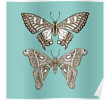 Butterfly, Butterfy (Aqua) Poster