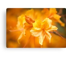 The Colour Orange - Azalea Canvas Print
