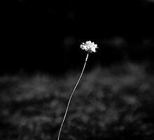 THE LAST FLOWER by Steffen Remter