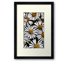 Close up of Wild Daisies Framed Print