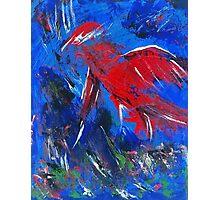 Bird in Flight over Water Photographic Print