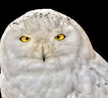 Wise owl by Thea 65