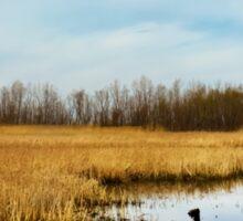 Sheldon Marsh - Marshland In Spring Sticker