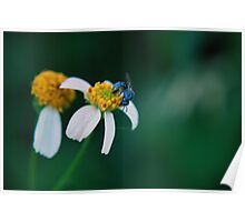 Iridescent Blue Fly Poster