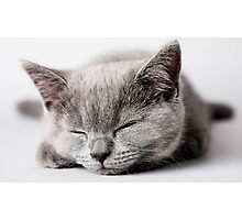 gray sleeping cat Photographic Print