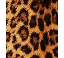 Leopard by Viterbo