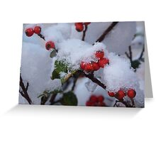 Red Berries in the Snow Greeting Card