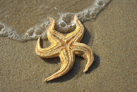 Starfish and bubbles by Kerry  Hill