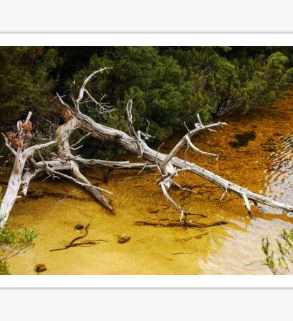 Tree in Dove Lake - Cradle Mountain Sticker