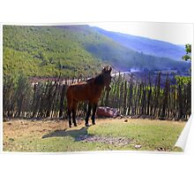 Wild Horse - Nature Photography Poster