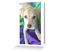 Honey chillin outside♡ Greeting Card