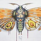 orange moth by federico cortese