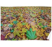 United Colours of Autumn Poster