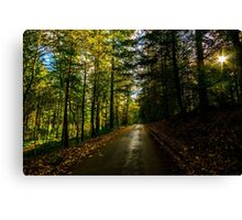 Autumn sunshine through the trees in Longleat Forest, Wiltshire Canvas Print