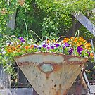Pansies Contained by Elaine Teague