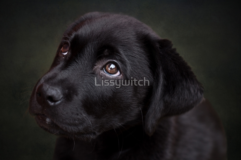 P is for.....Puppy dog eyes by Lissywitch