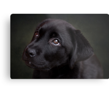 P is for.....Puppy dog eyes Metal Print