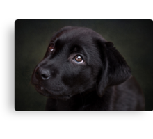 P is for.....Puppy dog eyes Canvas Print
