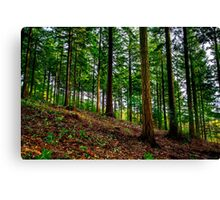 Longleat Forest - Trees at Autumn Canvas Print