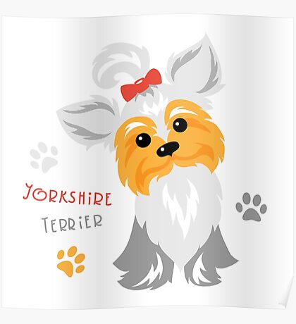 silver blue and pale cream Yorkshire terrier Poster