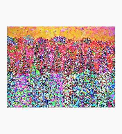 Colorful Garden Photographic Print