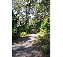 Hole in the Wall Walking Track Photographic Print