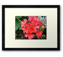 pretty small red flowers Framed Print