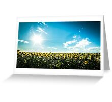 sunflowers field in a summer day Greeting Card