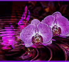 Purple Orchids by LudaNayvelt