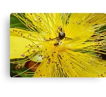 Insect Attraction Canvas Print