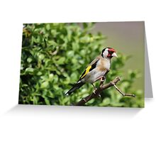Little GoldFinch Bird Design Greeting Card