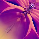 Floral Gem Abstract by SexyEyes69