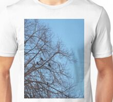 Group of jackdaws Unisex T-Shirt
